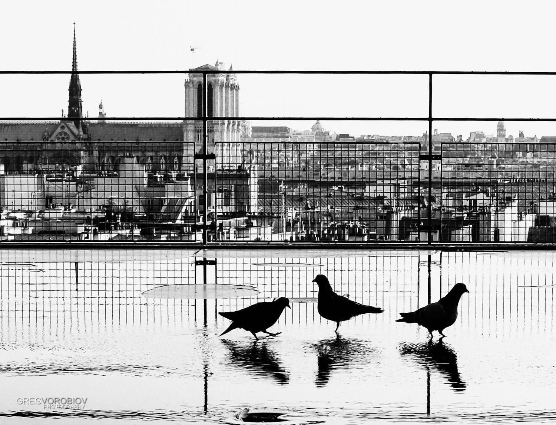 pigeons_pompidou_paris_by_greg_vorobiov-1.jpg
