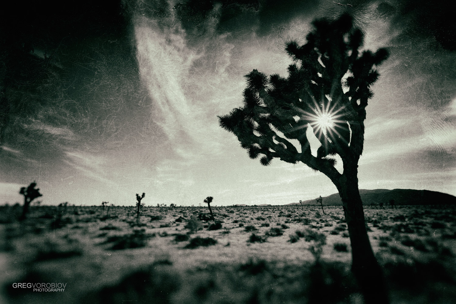 joshua_tree_by_greg_vorobiov.jpg