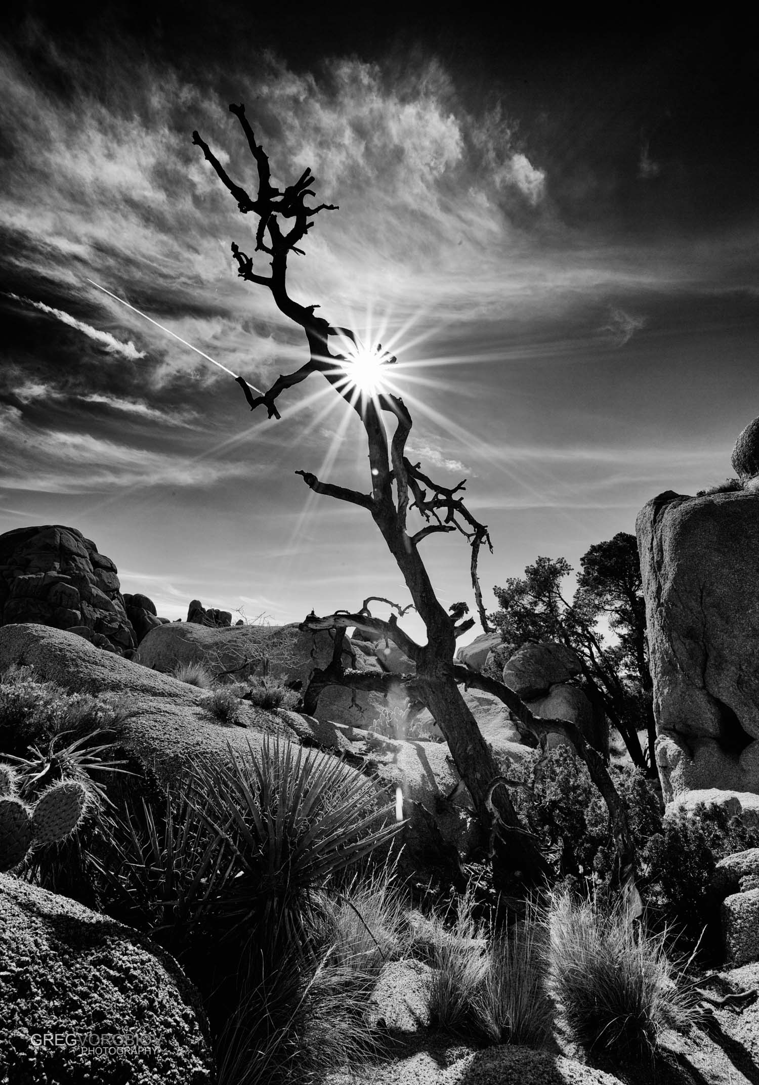 joshua_tree_by_greg_vorobiov-2.jpg