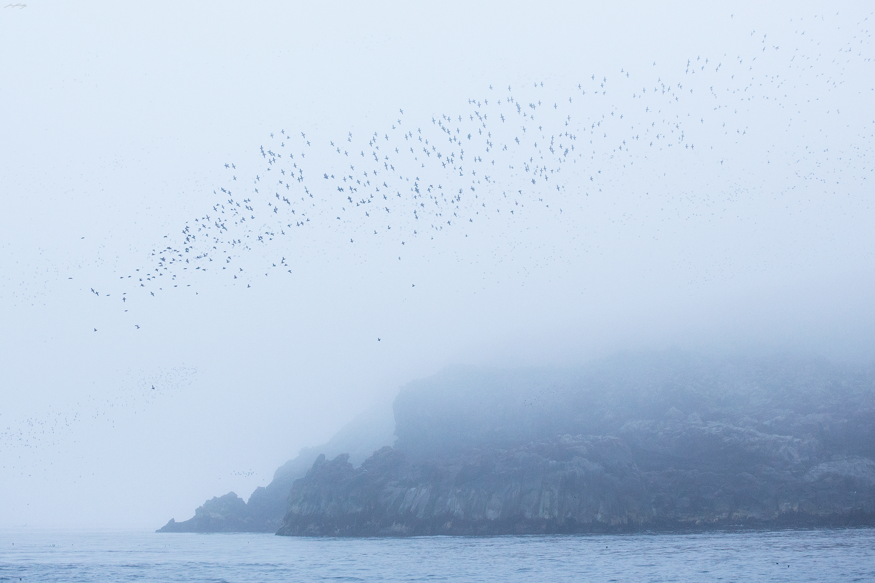 A massive flock, mostly consisting of Crested and Least Auklets liftsoff a coastal rock formation on Kiska Island. Twoexplosive eruptions in the mid 1960's released large lava flows, the cooled rock of which is now occupied by millions of nesting seabirds each spring.