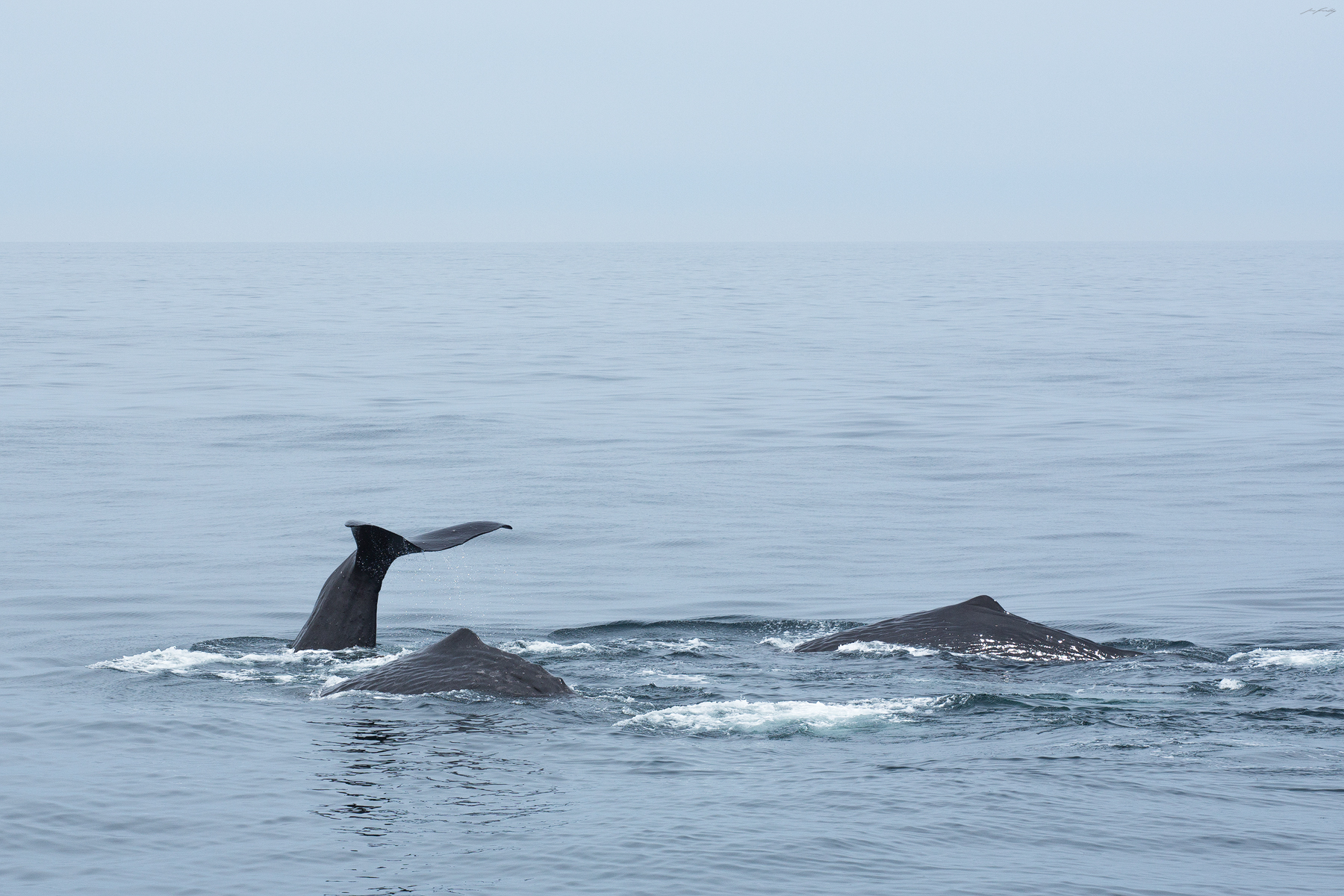 Sperm Whales