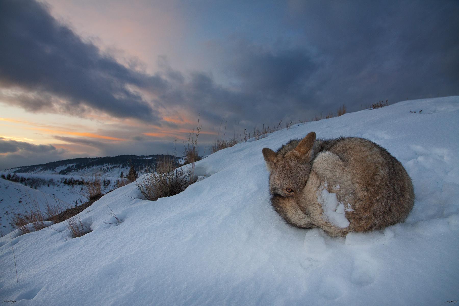 SunsetSlumber_website.jpg