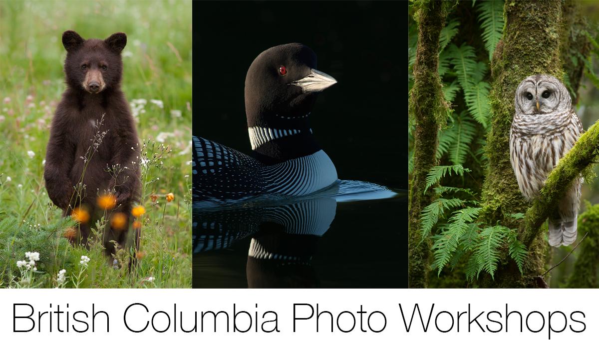 BCPhotoWorkshops.jpg
