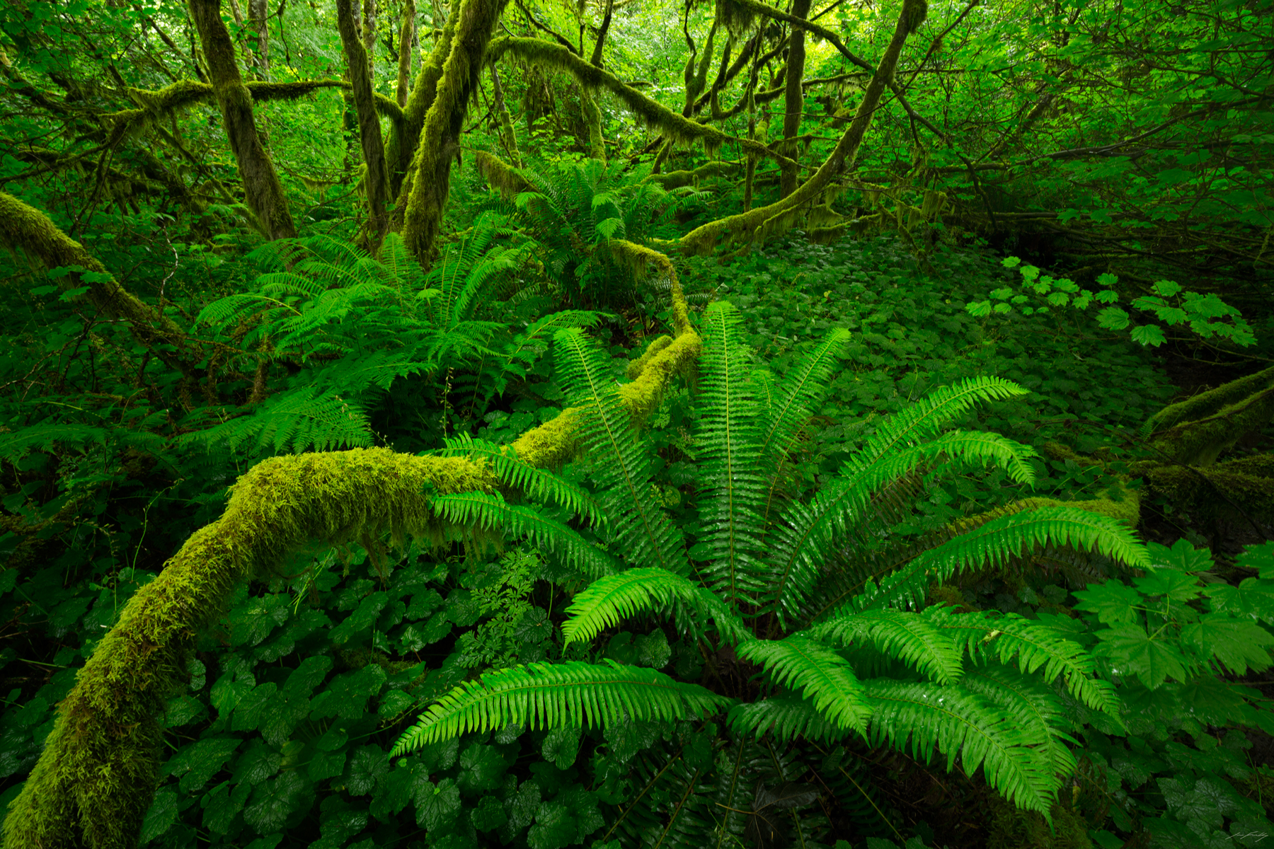 Temperate Rainforest, British Columbia, Canada