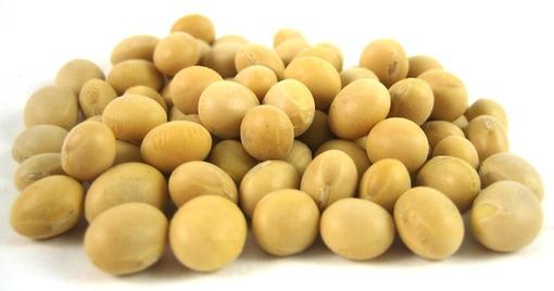 Soy Beans, Organic: $0.44 / 100g