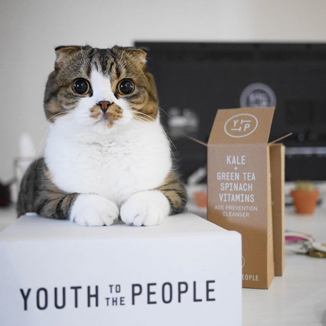 peoplemap-macchacat-influencer-cats3.jpg