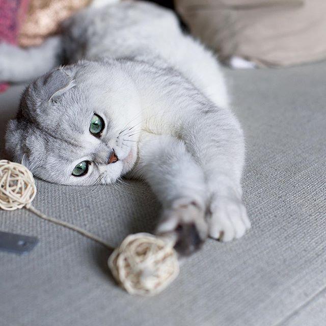 peoplemap-superhirocat-influencer-cats3.jpg