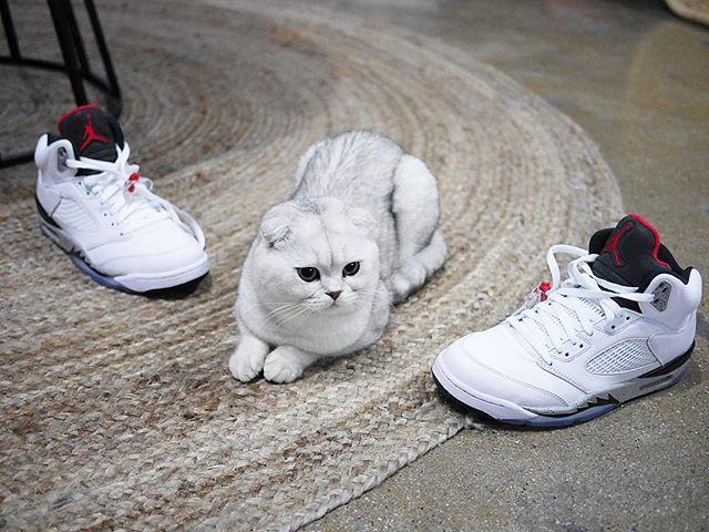 peoplemap-superhirocat-influencer-cats4.jpg