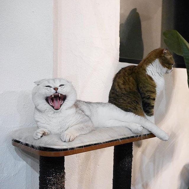 peoplemap-superhirocat-influencer-cats2.jpg