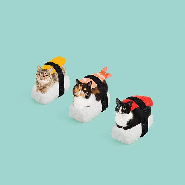 peoplemap-pudgethecat-influencer-cats.jpg