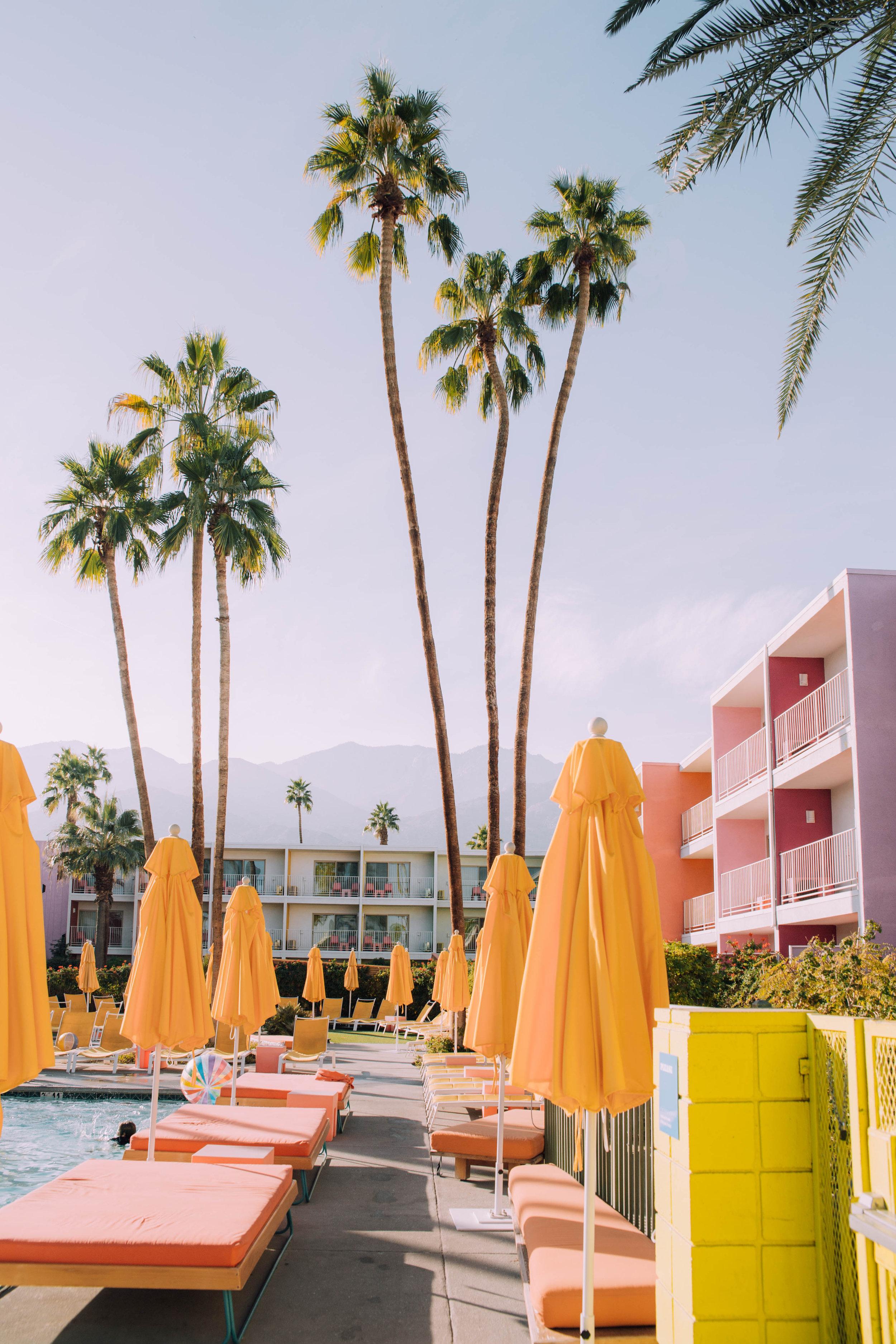 The Saguaro Palms