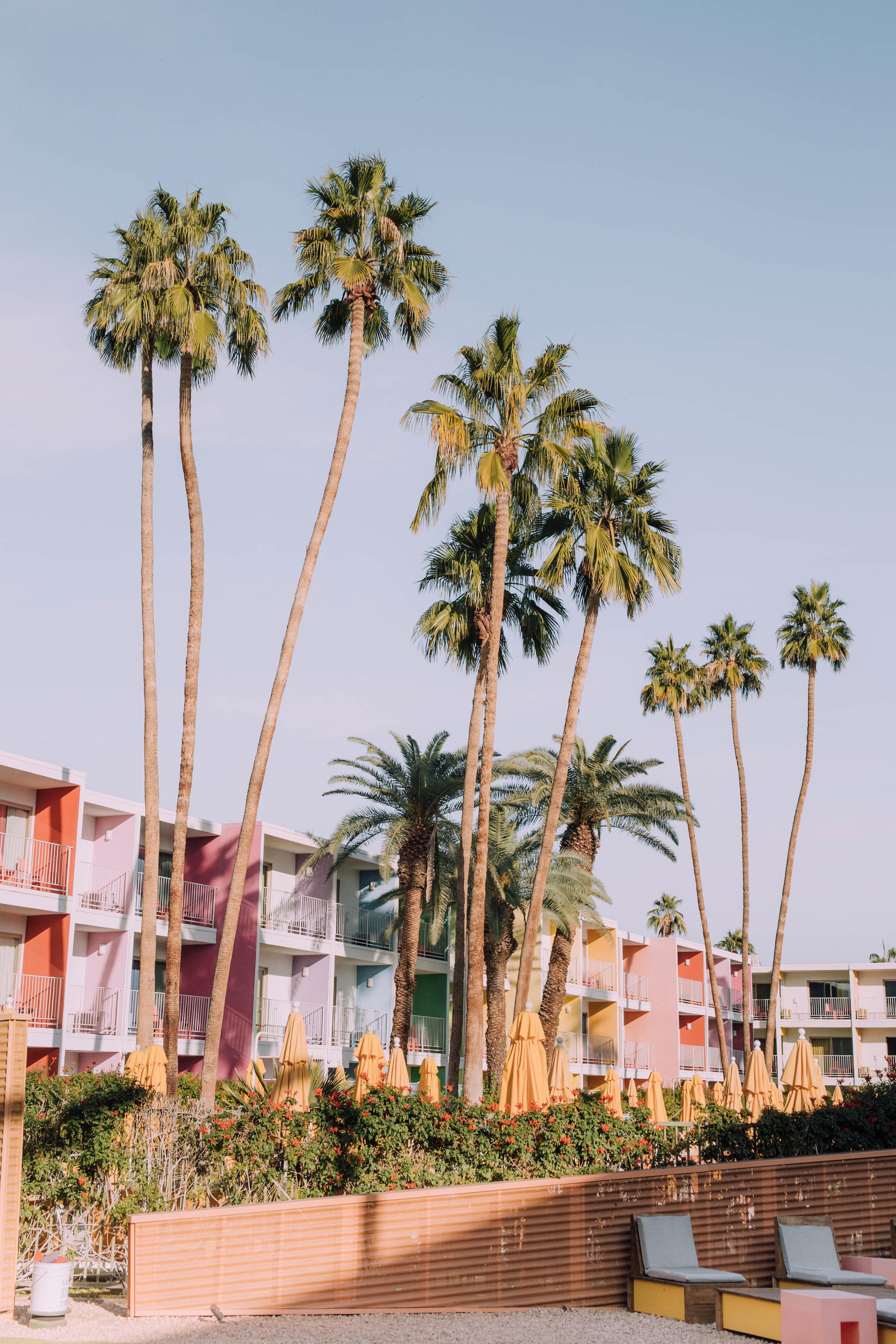 Palms at The Saguaro