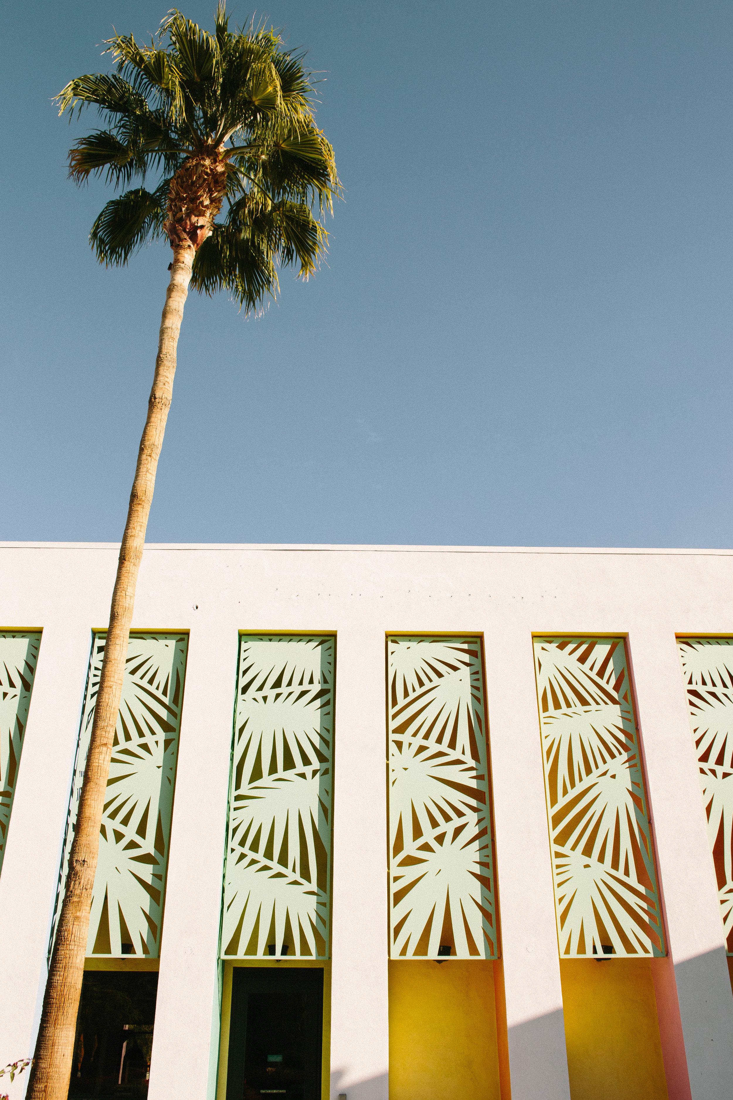 Springs Palm