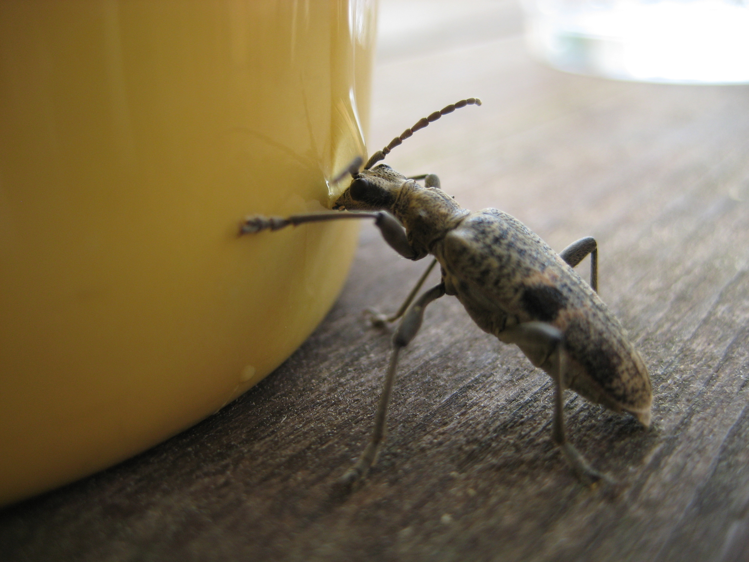 Someone else enjoying the trace of honey