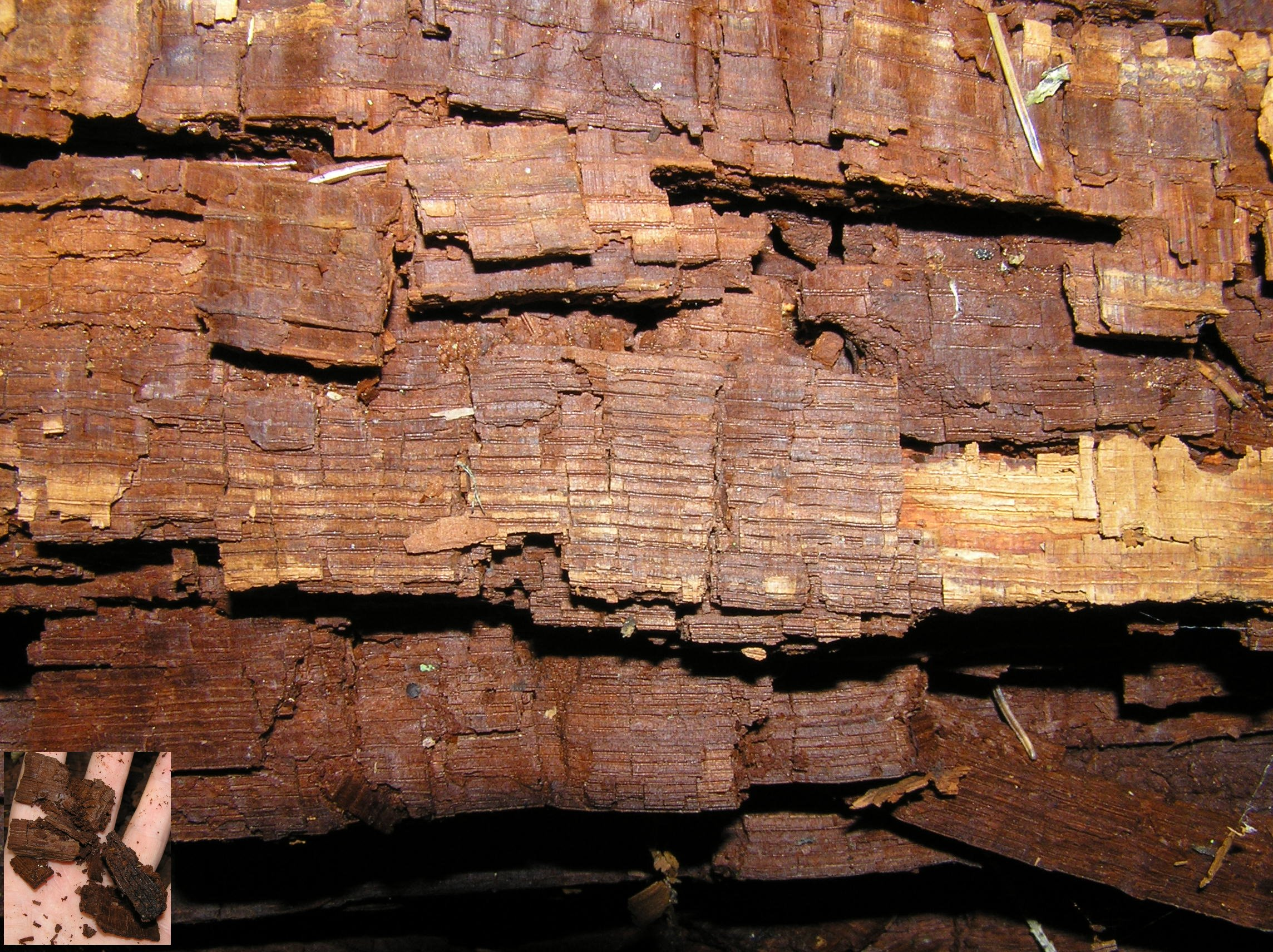 Cubical Brown Rot ON WOOD