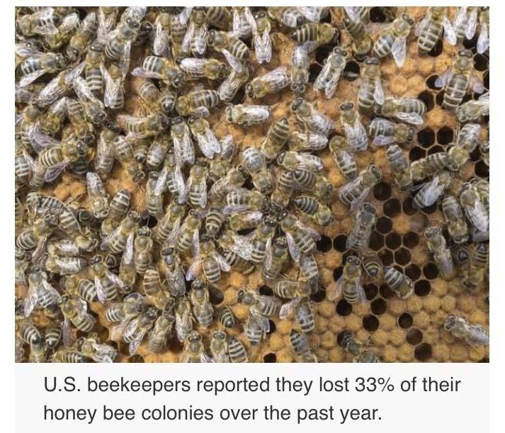 bees usa.jpg