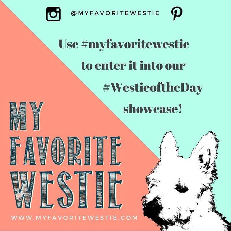 My Favorite Westie on Instagram