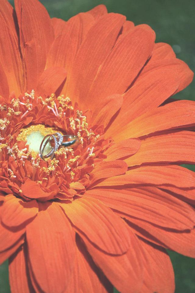 Wedding Rings on Flower.jpg