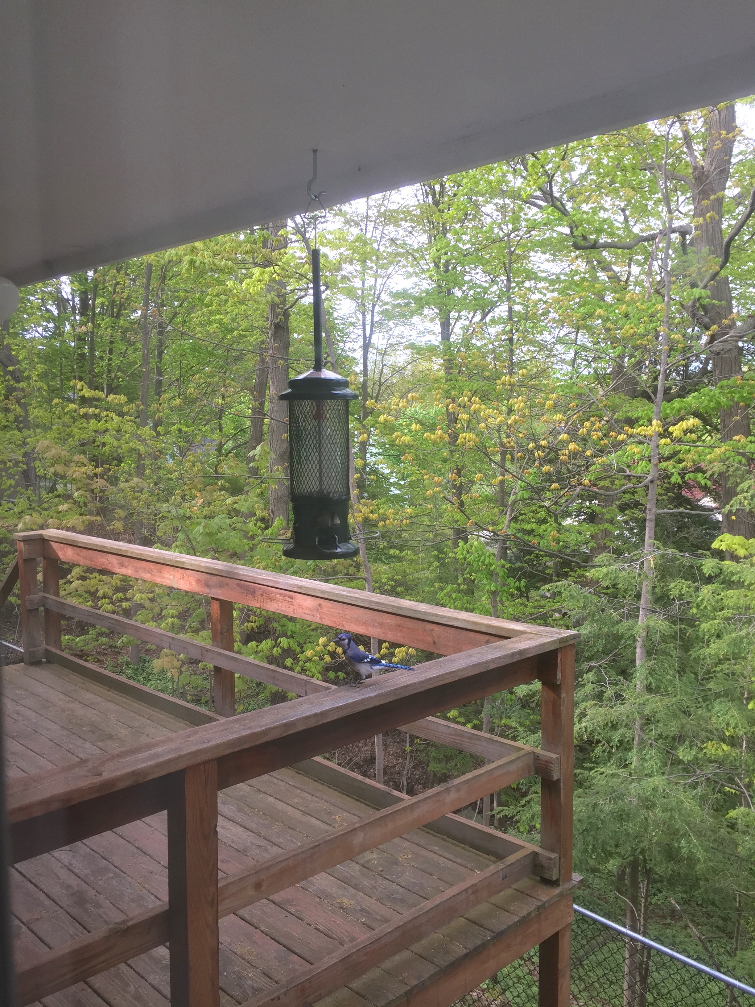 View off the back-deck