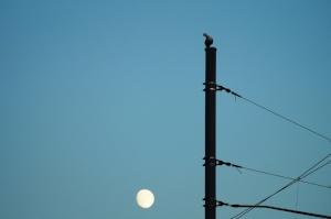 bird-blue-sky-construction-125580.jpg