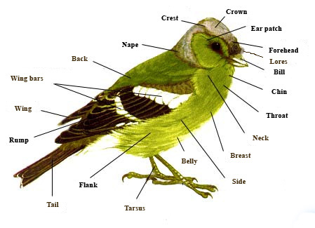 bird-parts_.jpg
