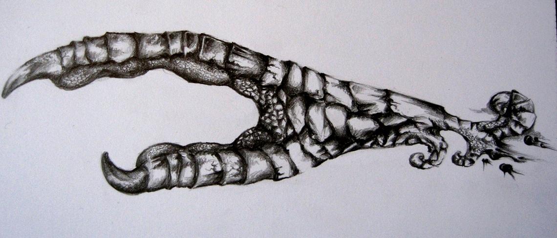 Crow claw hand tattoo