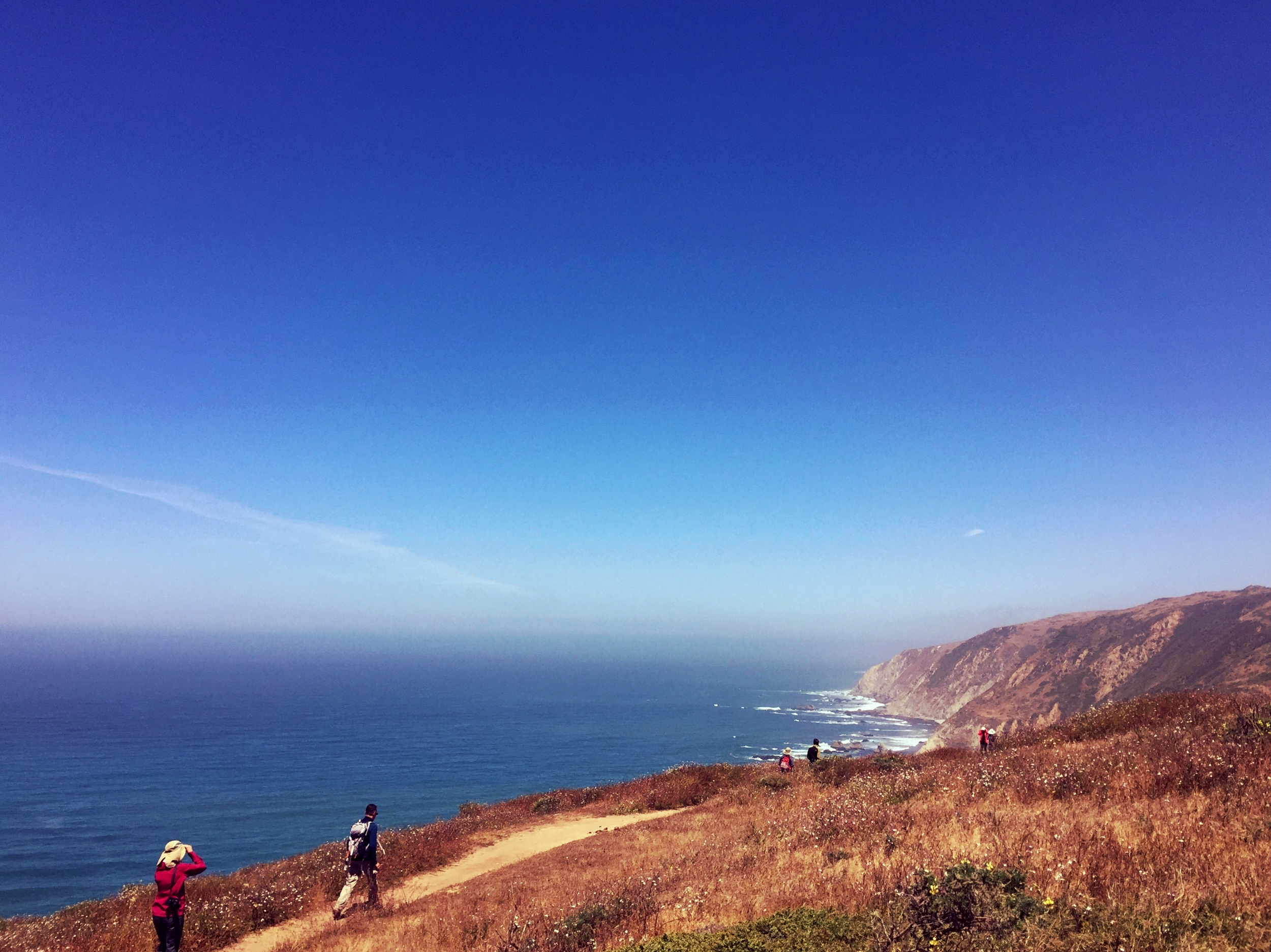 Tule Elk Reserve, Point Reyes National Seashore.
