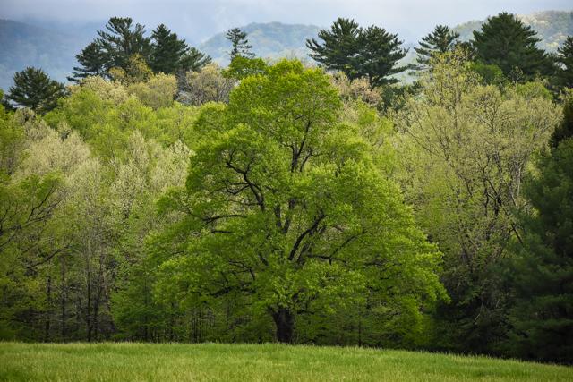 Smoky Mountains Heidi-0354.jpg