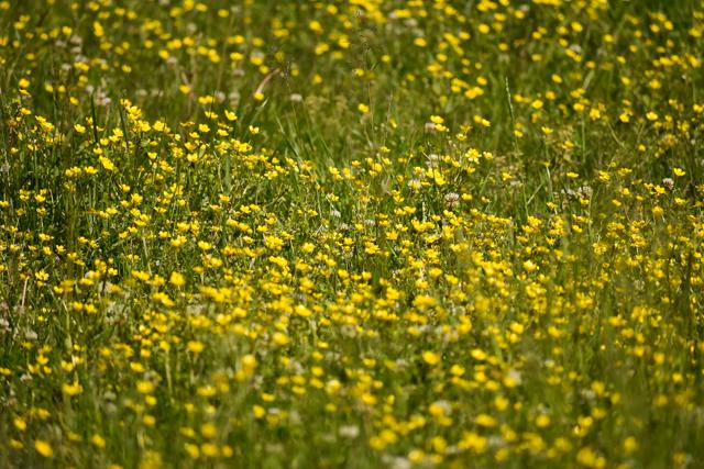 Smoky Mountains Heidi-0788.jpg