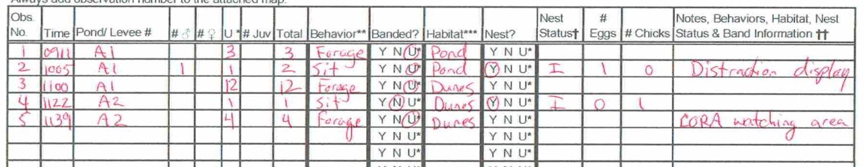 Figure 1. Example of Shiny Sandpiper breeding survey paper datasheet