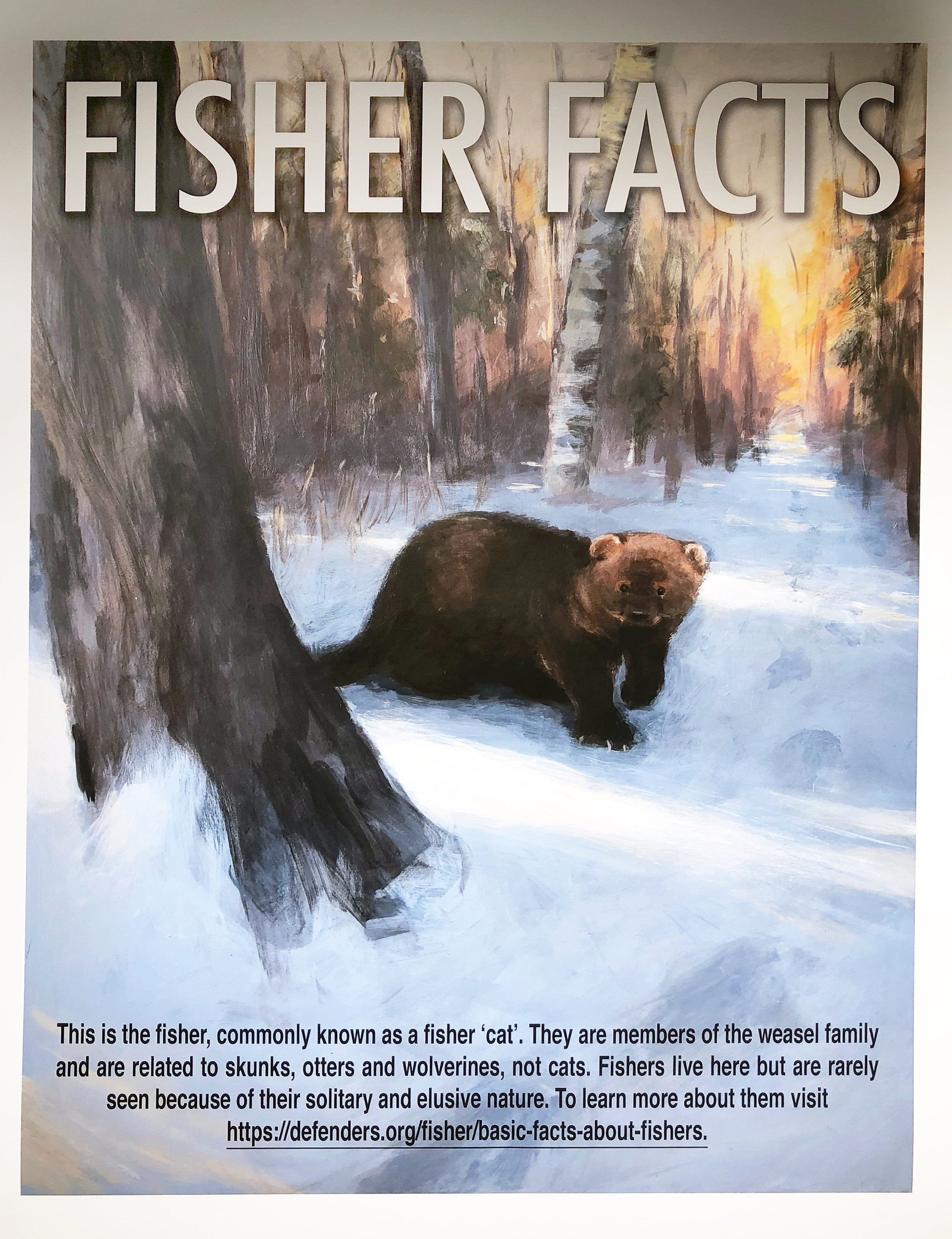 Fisher Facts by Ali Bartlett