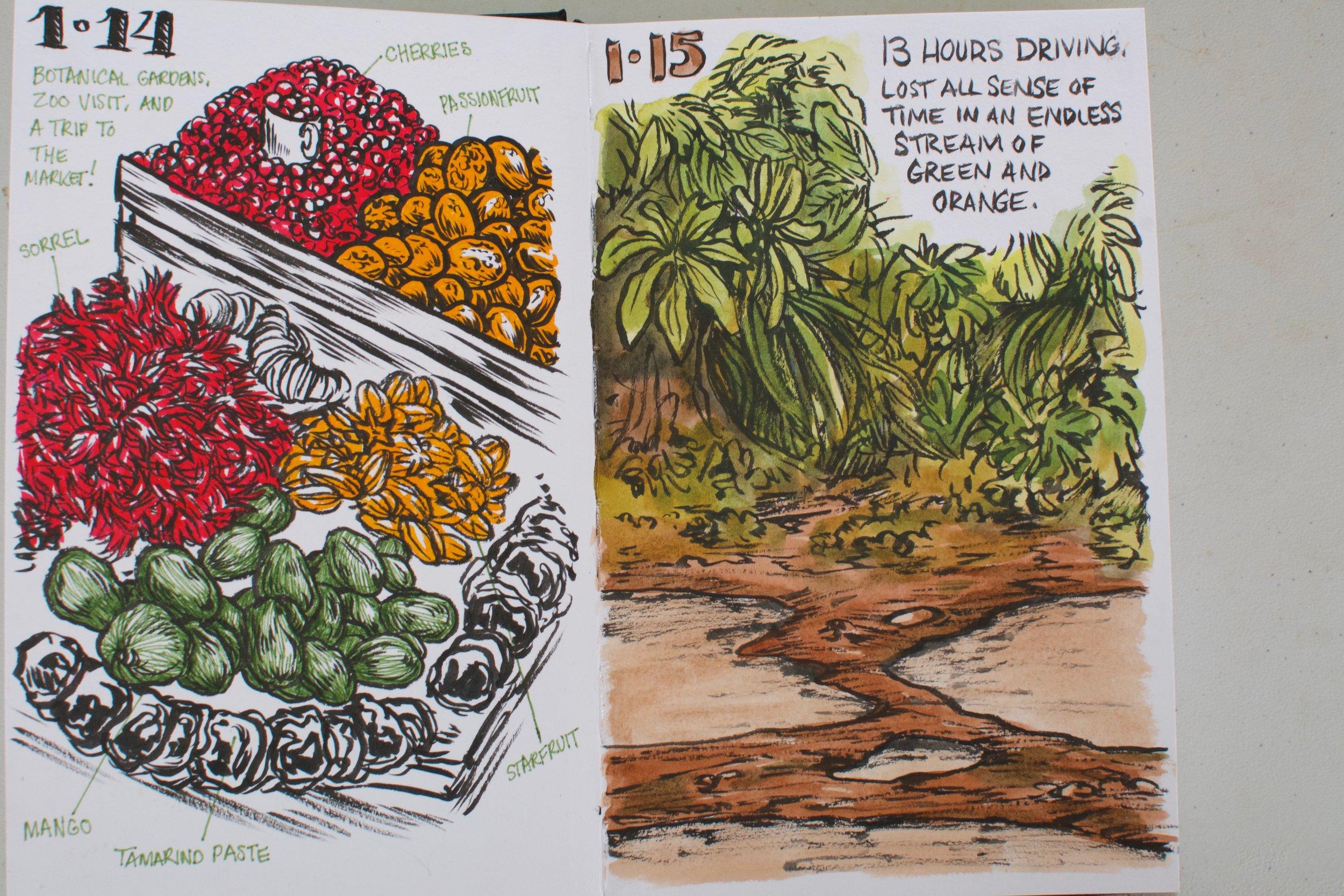 Emily Poole Guyana Sketchbook - 6.jpg