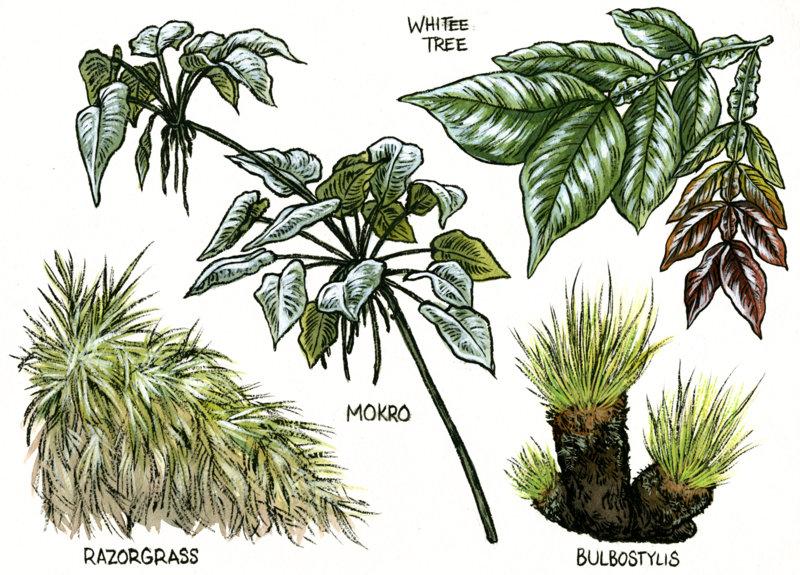 7-Surama Plants.jpg