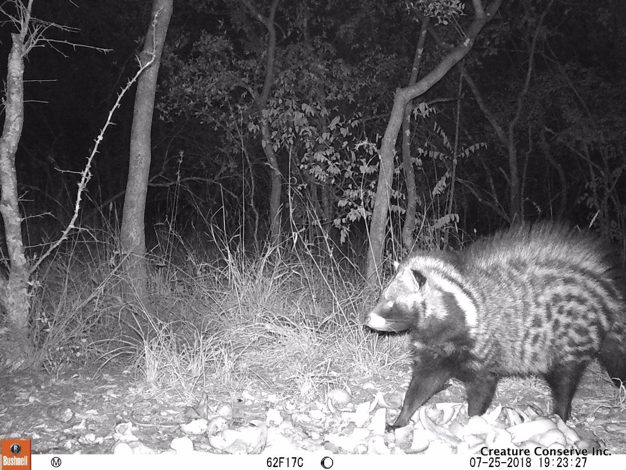 Civet-2018-07-01-05-20-43 Nov 30, 2018 at 5-39 PM.jpg
