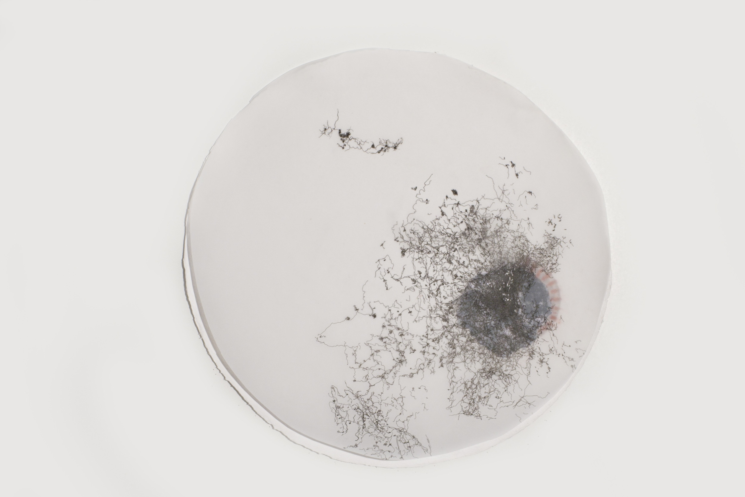 """In the Scale of Things 7   ink, collage, on vellum   12""""diameter   2010-2011"""