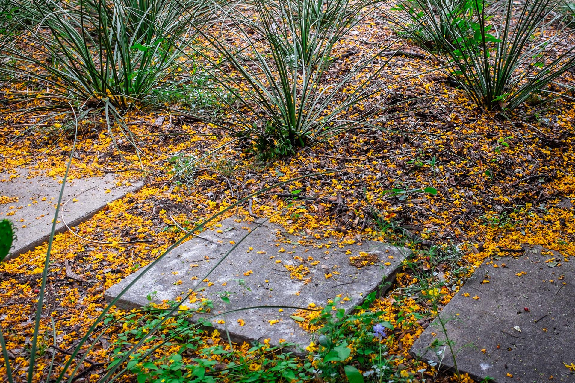 garden-02.jpg