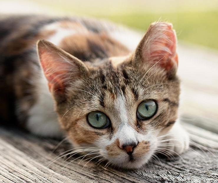 ear_tipped_cat.jpg