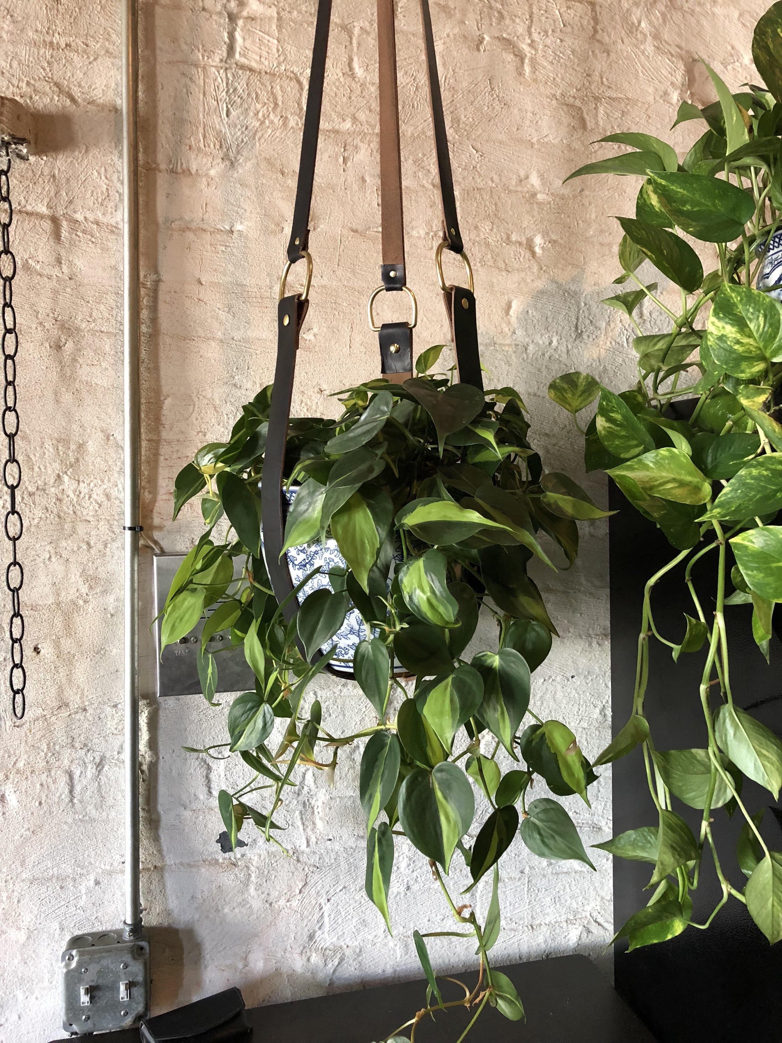 XL Plant Harness ( 2017 )
