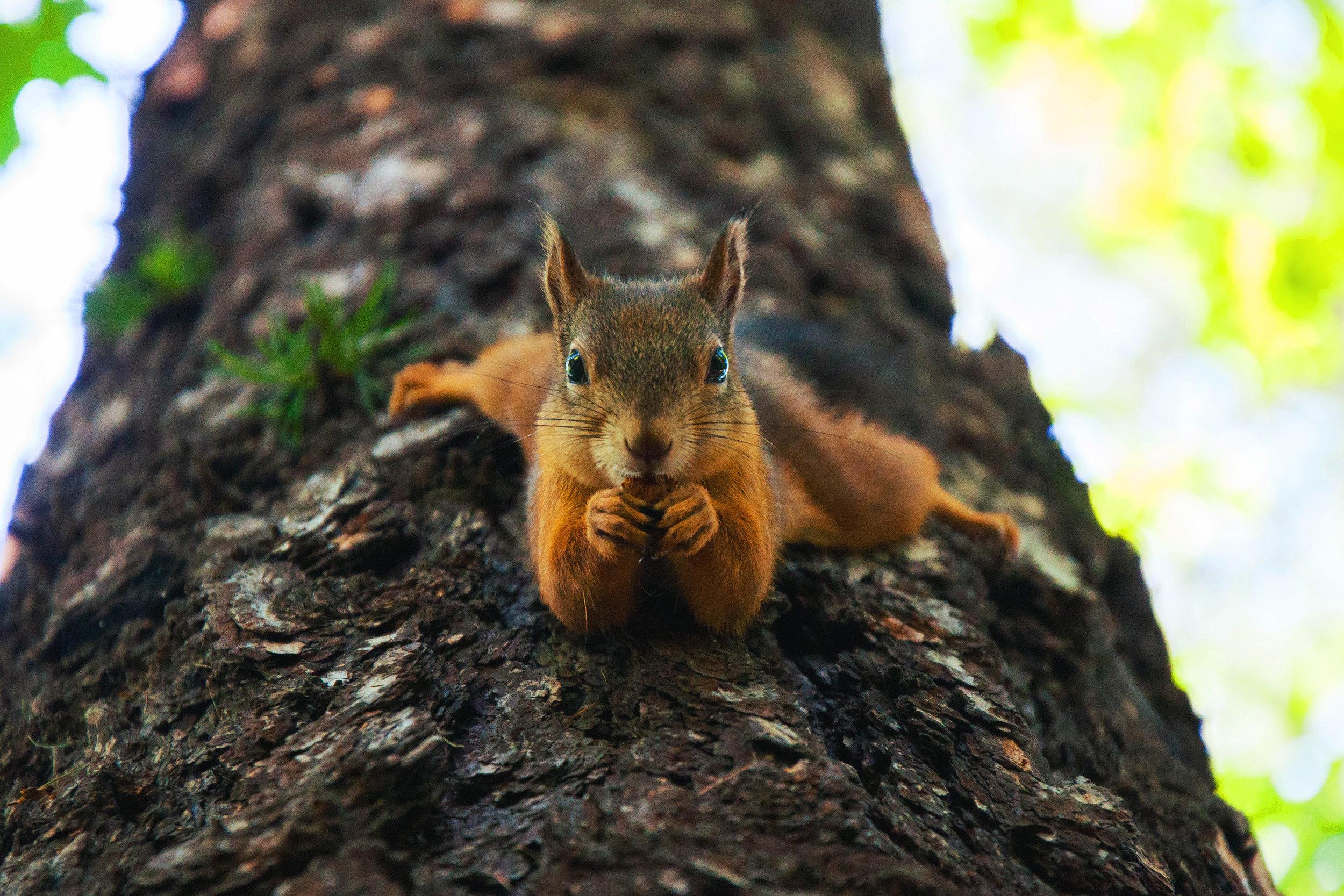 Squirrel on Tree Image.jpeg