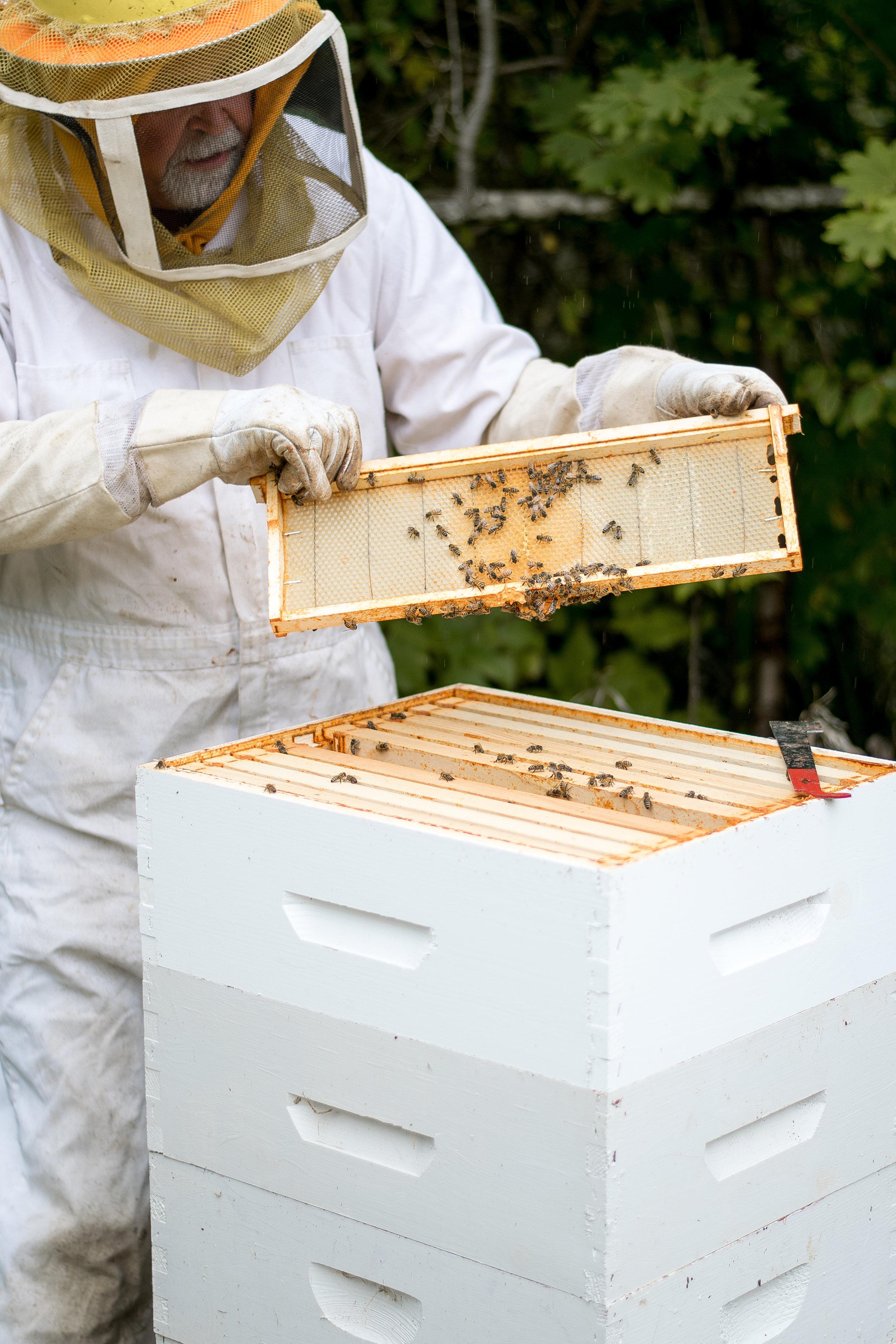 Fall Honey Harvest | All Purpose Flour Child