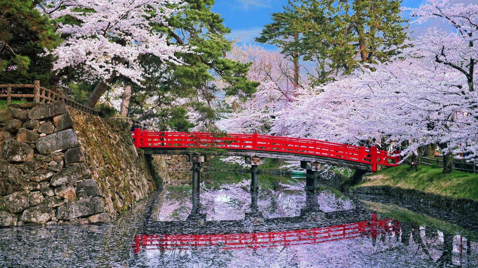 Cherry blossoms around the world - While Japan is home to some of the most well-known cherry blossom scenes, many cities celebrate spring's arrival with these beautiful blooming trees. //BBC Travel