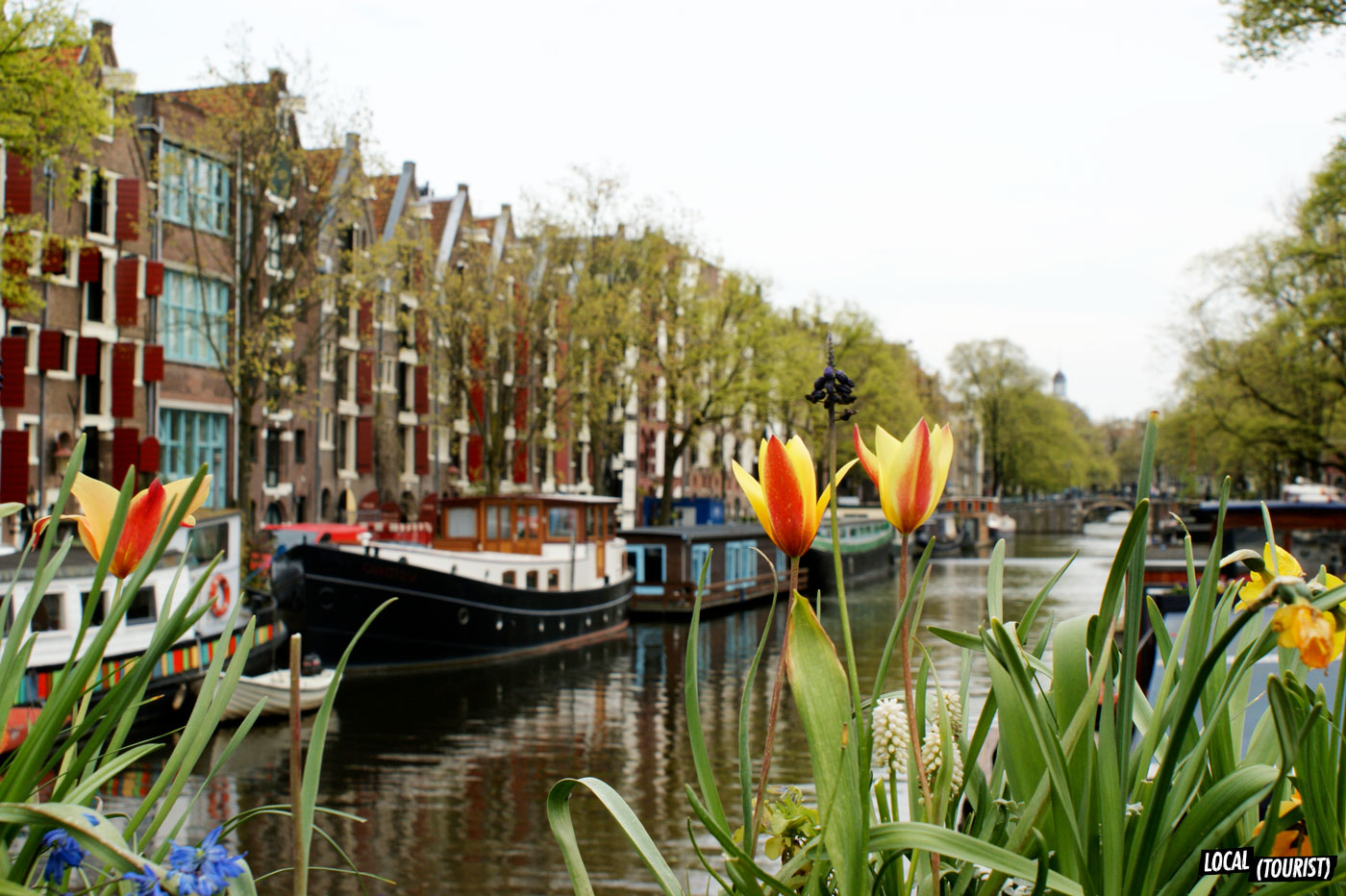 Canal-Tulips_Amsterdam_Local(Tourist).jpg