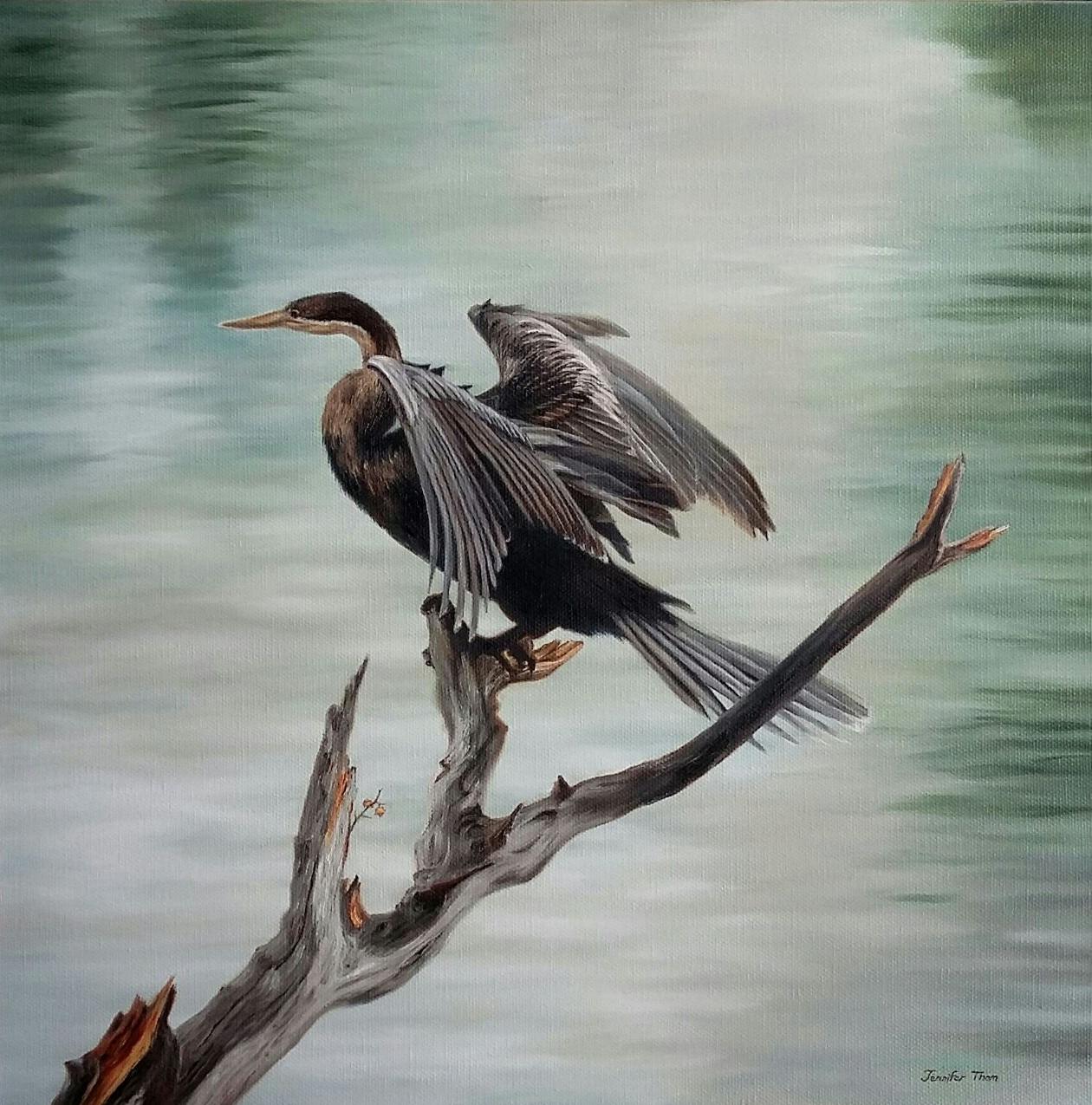 Wing-Spread Cormorant