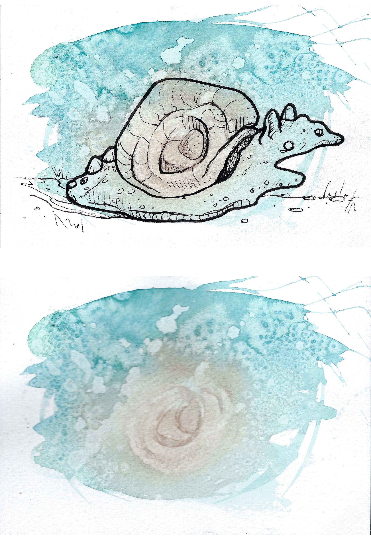 Snail Comparison