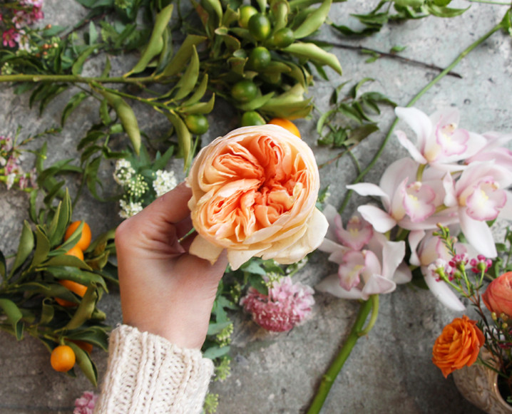 CHALKBOARD_Valentine's_Day_Florals_Sibyl_Sophia_Garden_Rose.jpg