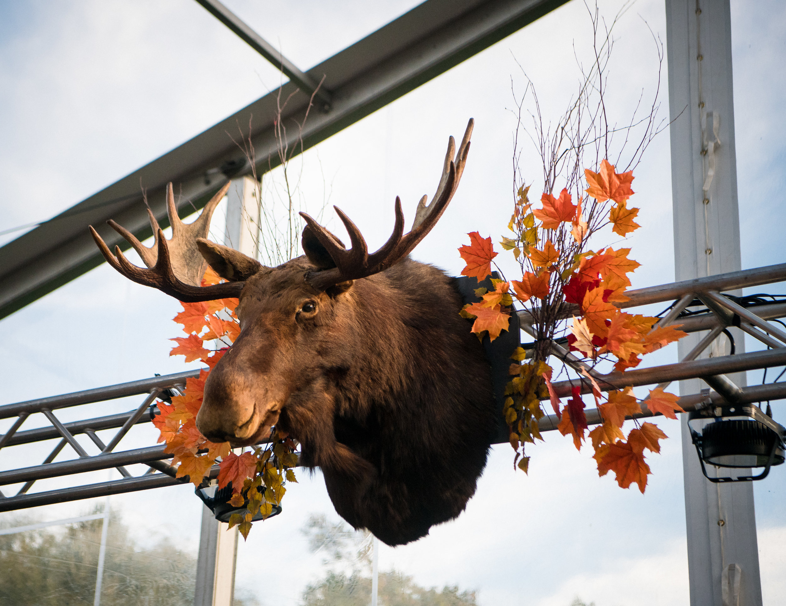 moose+head+rental+prop+rentals+nj+ny+pa+eggsotic+events.jpg