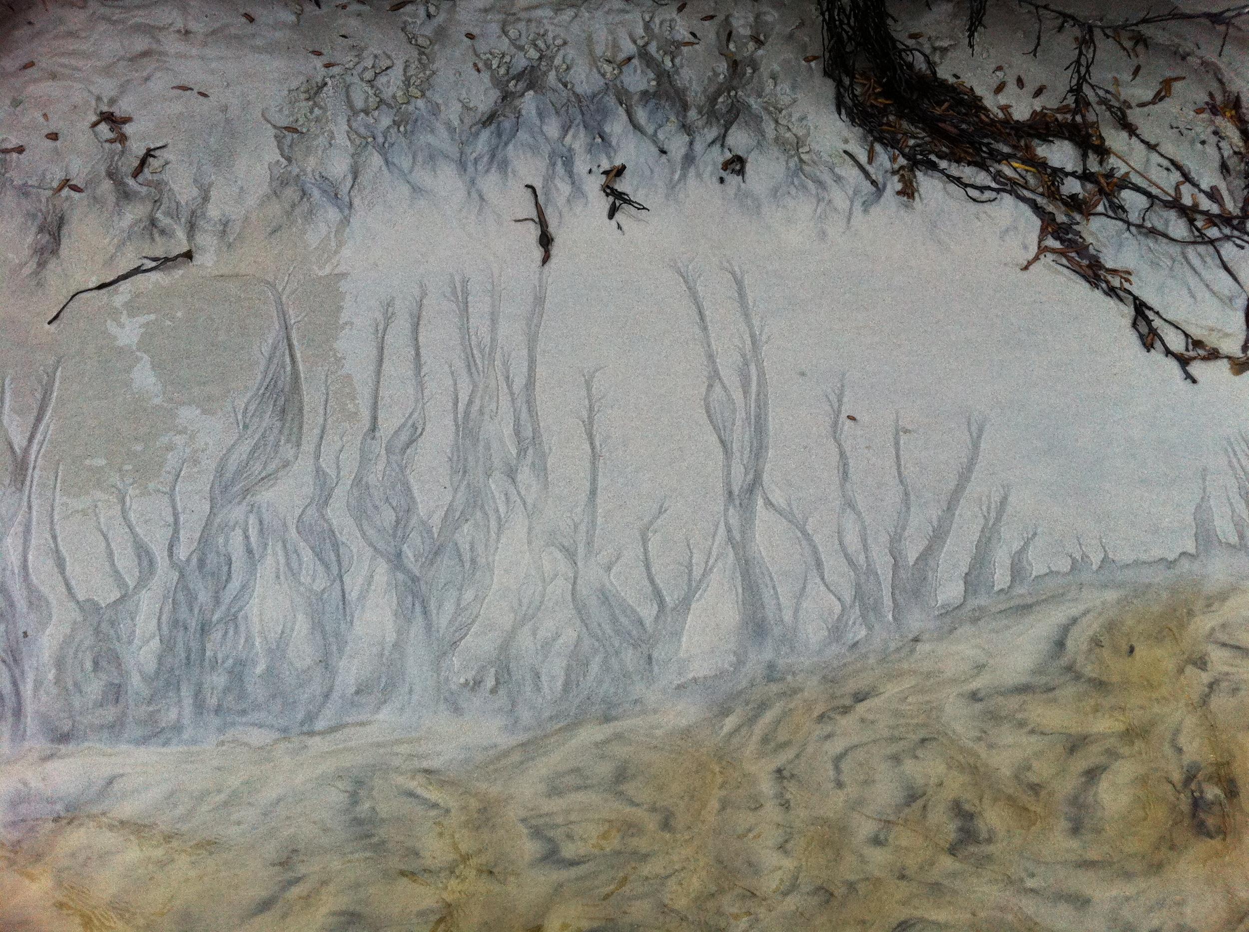 Bilde fra Andøya