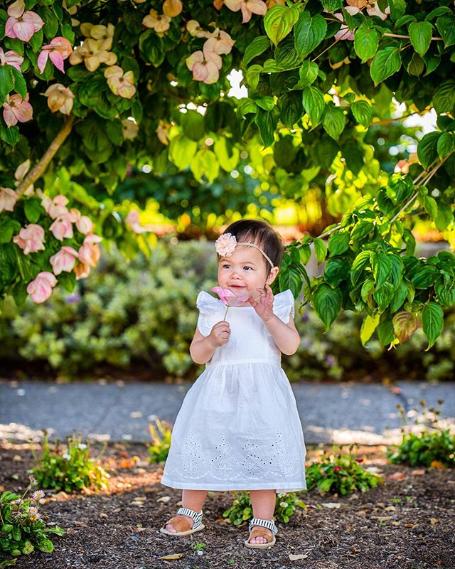 Fortunate to live in a neighborhood where everyone takes pride in their landscaping. Because of that, we're able to turn our casual walks into an impromptu photo session😂📸🌸. #therealmvp #pnwphotographer #alkibeach