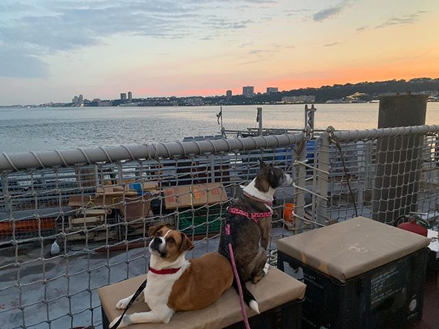We are still basking in the wonderful time we had at our third annual Boat Party last night! 🛥🥂🐾🗽We'll be back to our regularly scheduled program (and the introduction of new satos!) tomorrow, but we did want to send out one last HUGE thank you to all of you who attended, supported us financially and shared the word about our work - every dollar, every repost, helps! And thank you 🙏 to the wonderful entrepreneurs and businesses that donated goods and services to our silent auction and raffle (tagged below). You are ALL the reason we are able to continue saving satos. 🐾  @nycampcanine @trainersintransit @jrgiamo @sticksxbonesnyc @drwhitesmile @orangetheory @otfuws @livekellyandryan @schully @sticksxbonesnyc @amandabeararts @classickids_westside @shaggyswagbox @ktcollection @barkbox @fuzzypethealth @drlisalippman @papersource_columbusave @barrysbootcamp @kateperrydogs @sabyloo22 @westsidewine @dunhamcellars @aesopskincare @bookculturecolumbus @chelseabommel @domhealthyskinuws @kiehls