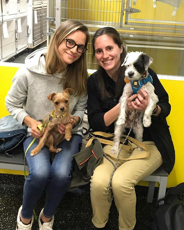 #PUPDATE: Obie has found his furever home! He's now named Ollie and he is the new little brother to fellow ALR alum, @_margotwiththeflow_ - check out their insta, because they are the CUTEST pair. Let's all wish a huge congrats to Ollie, Margot and their mommas! 🐾